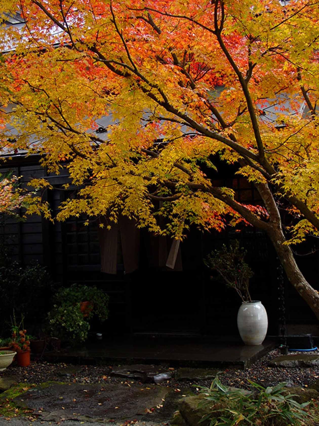 藤もと 玄関の紅葉 撮影:ザクプラン高山恵