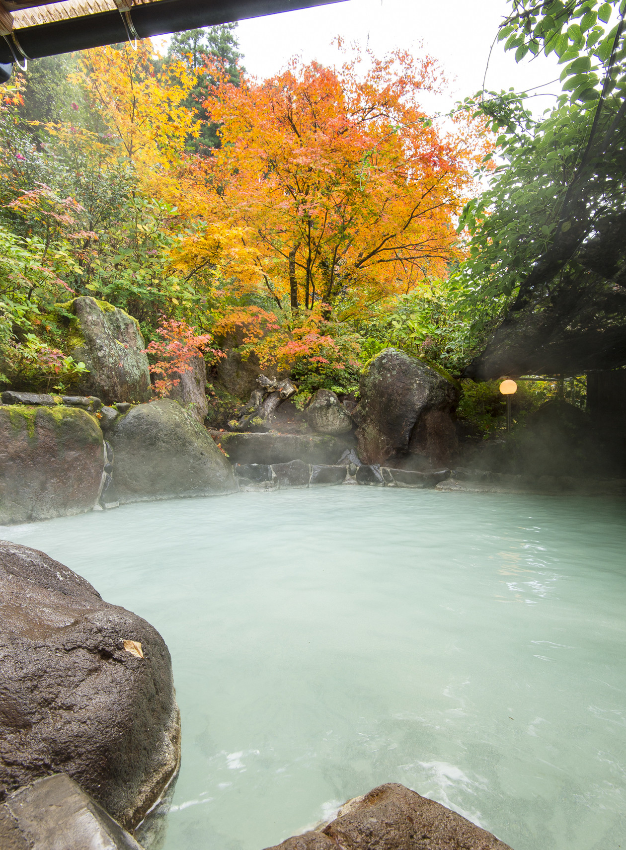 山川温泉 しらはなシンフォニー 紅葉