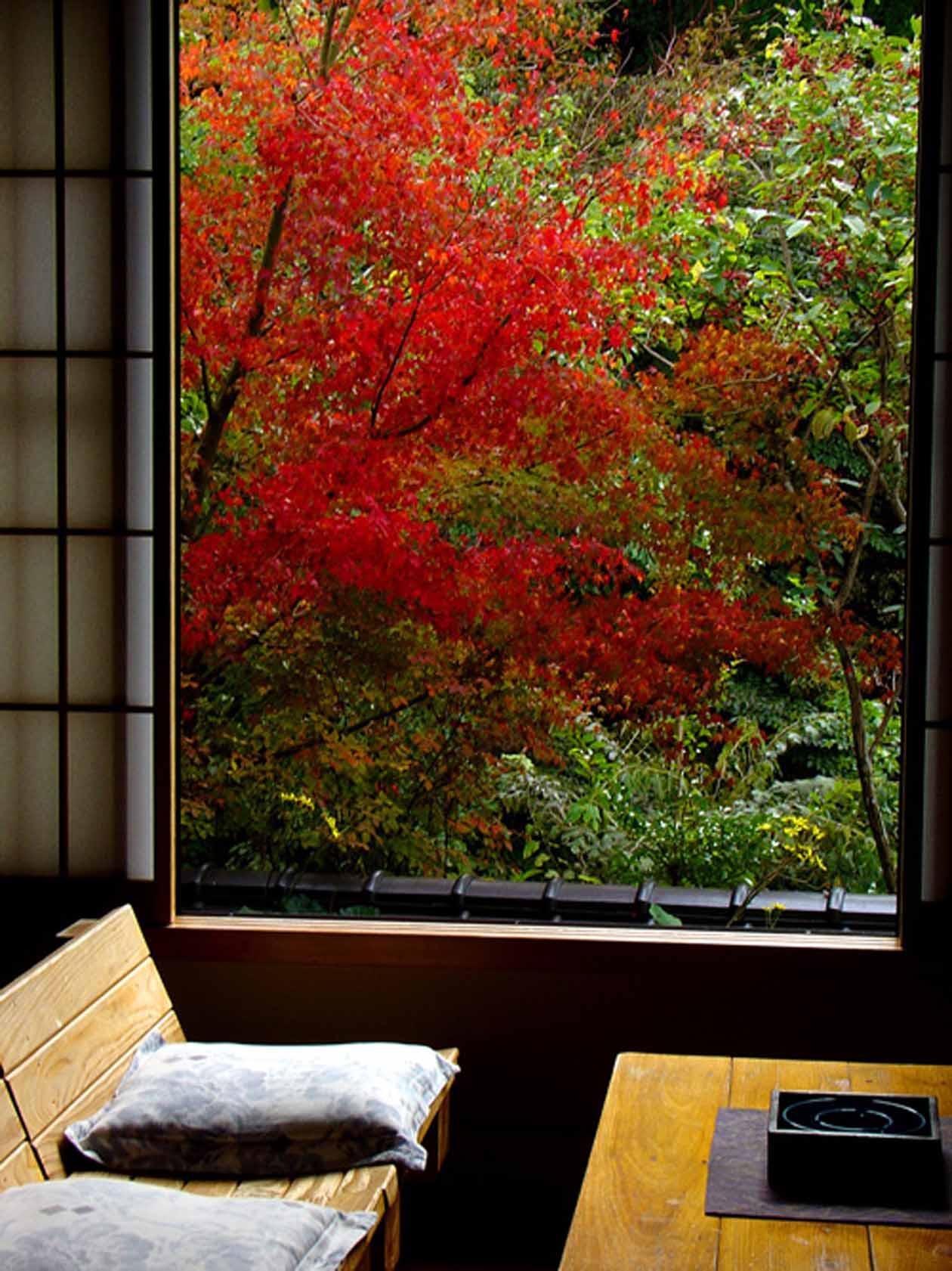 藤もと 部屋の紅葉 撮影:ザクプラン高山恵