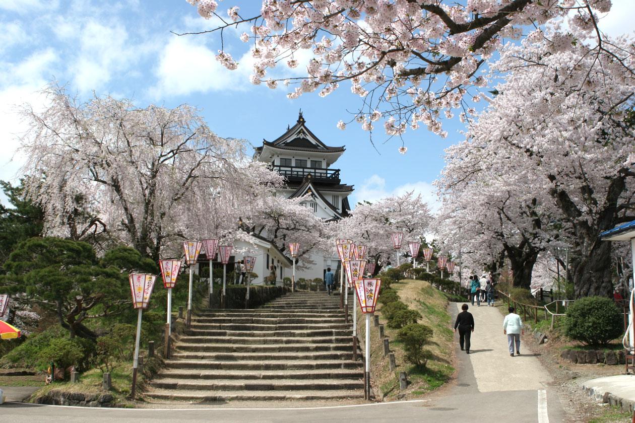 秋田県横手市 横手公園の桜