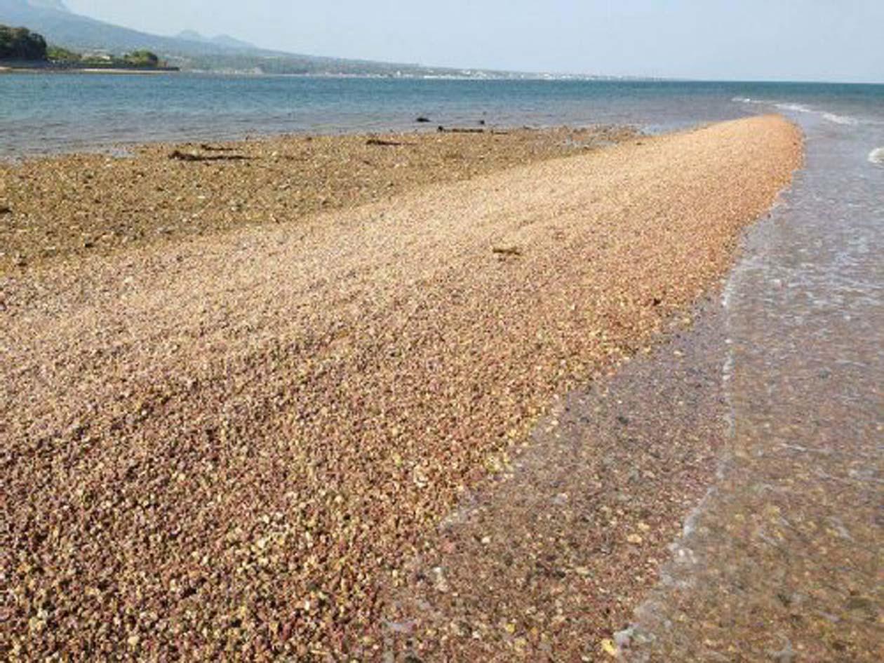 長崎県 南島原 リソサムニューム礁