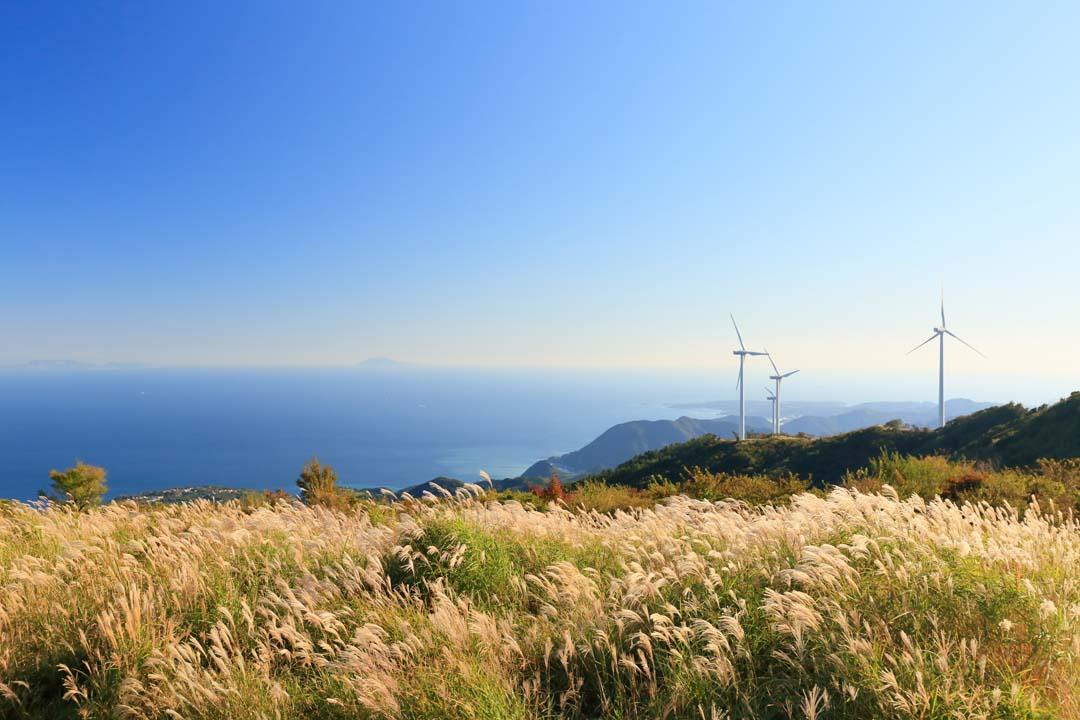静岡県賀茂郡東伊豆町稲取細野高原のススキの絶景 すすき
